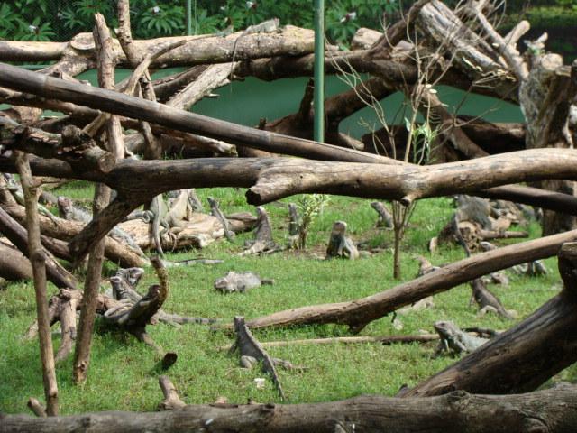 702_iguanafarm2