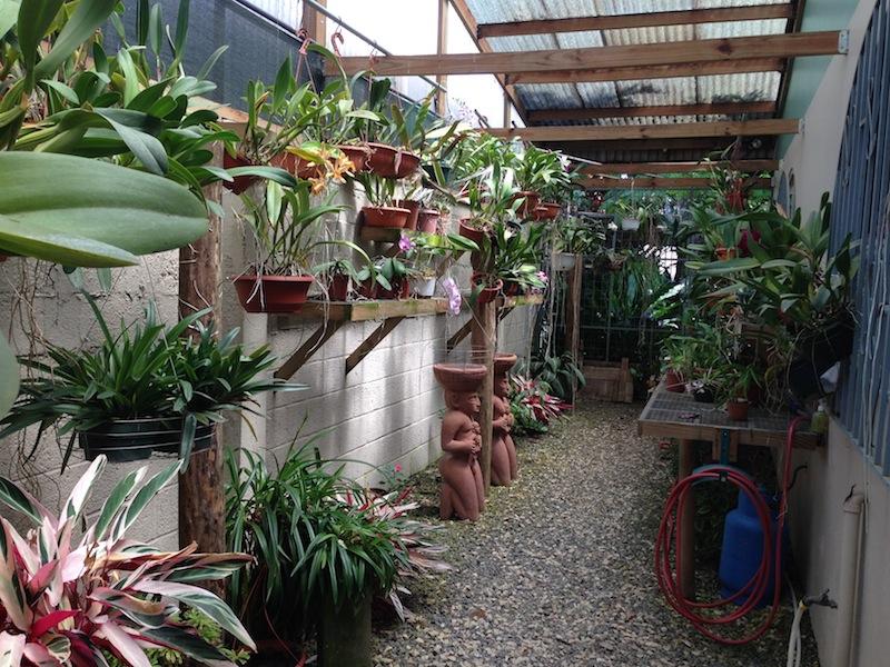3 orchid nursery north